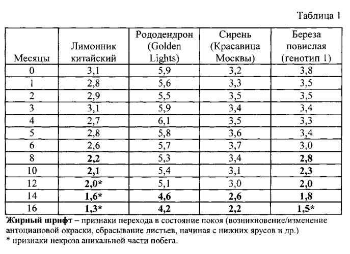 Способ сохранения качественных характеристик культуры in vitro некоторых древесных видов растений (лимонник китайский, рододендрон, сирень, береза повислая)