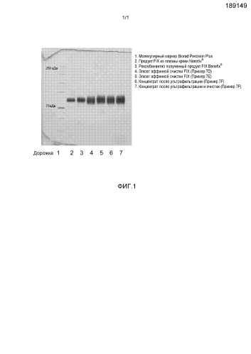 Способ очистки витамин к-зависимых белков, таких как коагуляционный фактор ix
