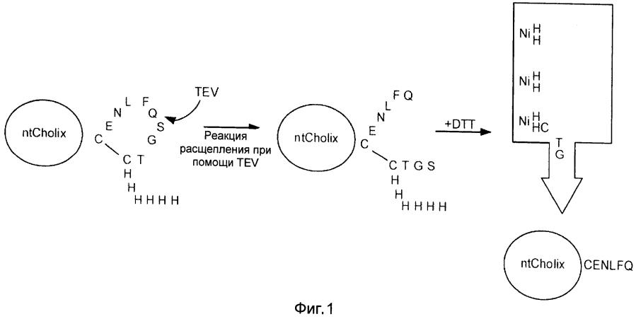 Системы и способы доставки биоактивных средств с применением транспортных последовательностей, происходящих от бактериального токсина