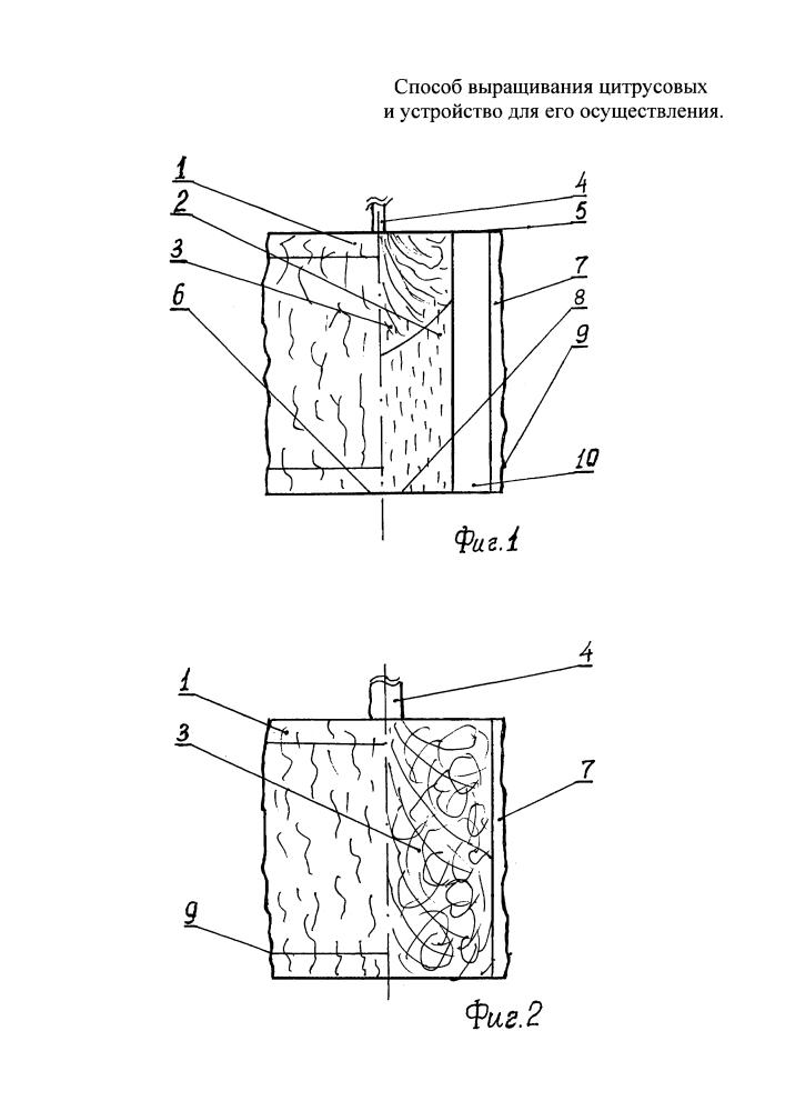 Способ выращивания цитрусовых и устройство для его осуществления