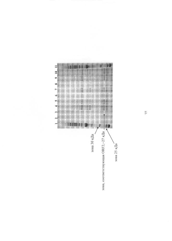 Способы снижения вирулицидной активности содержащих pcv-2 композиций и содержащие pcv-2 композиции с повышенной иммуногенностью