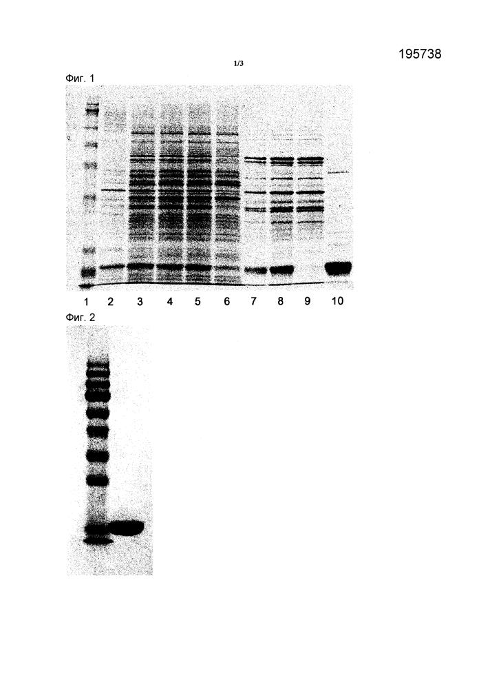 Способ очистки человеческого фактора, стимулирующего колонии гранулоцитов, из рекомбинантных е. coli
