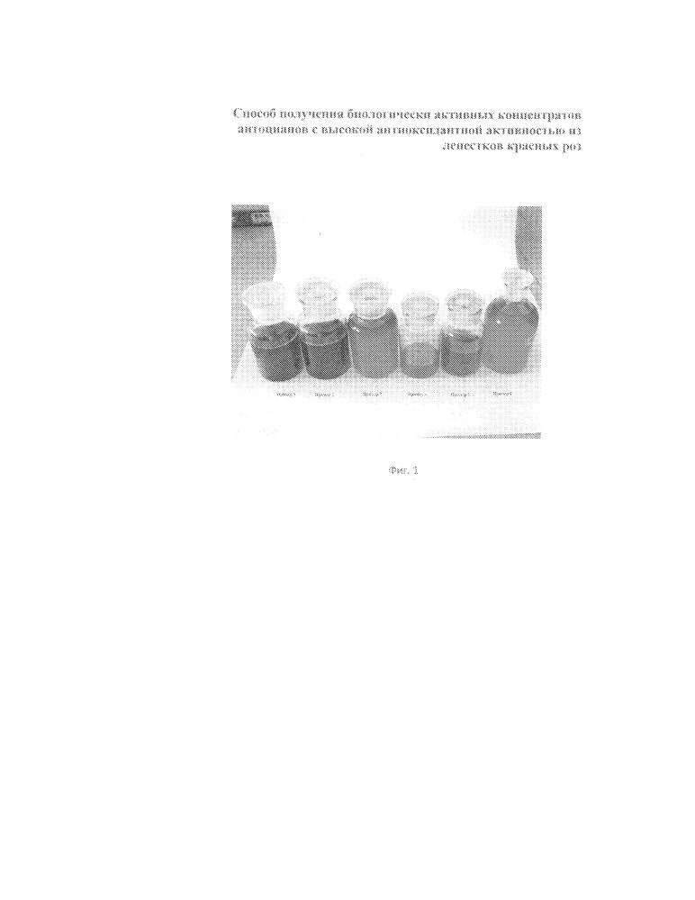 Способ получения биологически активных концентратов антоцианов с высокой антиоксидантной активностью из лепестков красных роз