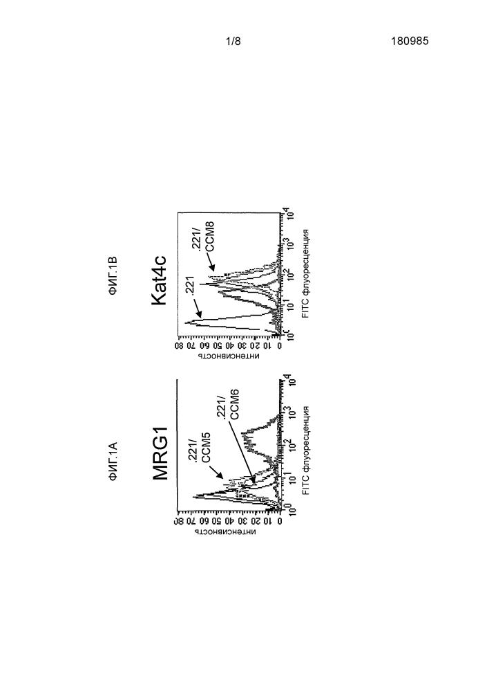 Антитела к сеасам1 и способы их использования