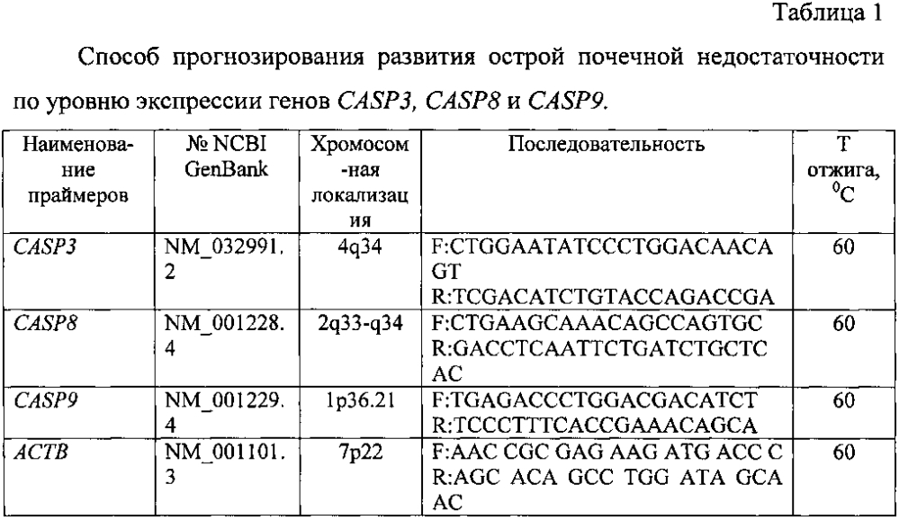 Способ прогнозирования развития острой почечной недостаточности по уровню экспрессии генов casp3, casp8 и casp9 после кратковременной ишемии почки