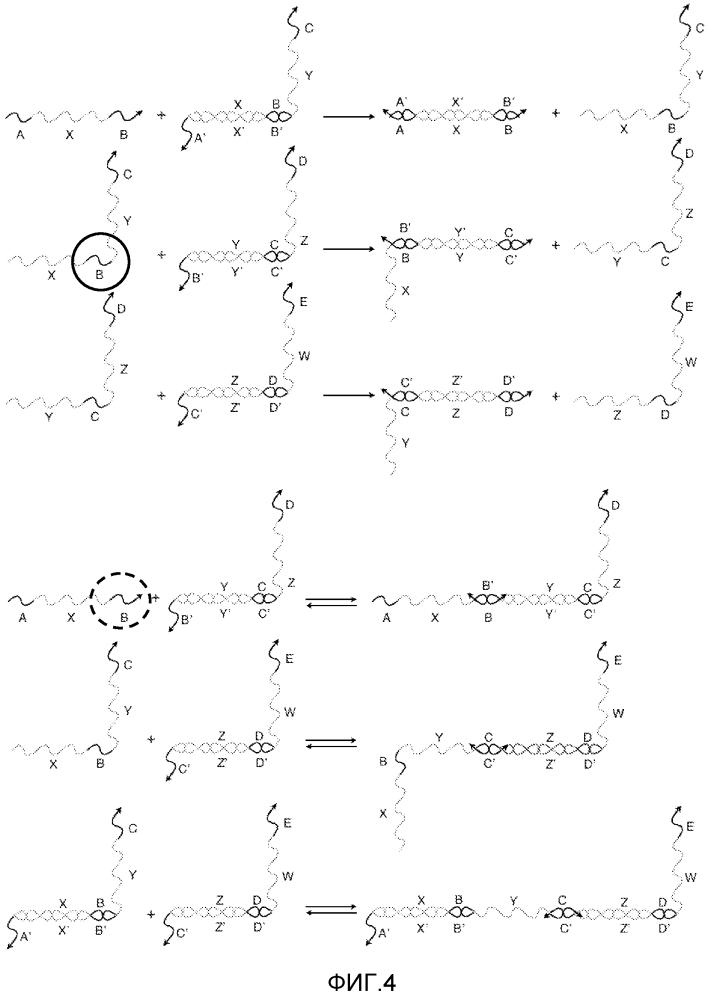Система и способ для распространения информации с использованием модифицированных нуклеиновых кислот