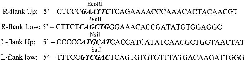 Рекомбинантный штамм vv-gmcsf-lact вируса осповакцины, обладающий онколитической активностью и продуцирующий гранулоцитарно-макрофагальный колониестимулирующий фактор человека и онкотоксический белок лактаптин