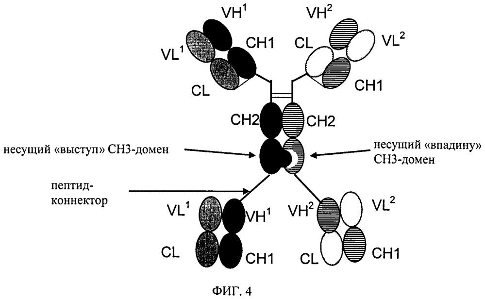 Биспецифические четырехвалентные антигенсвязывающие белки