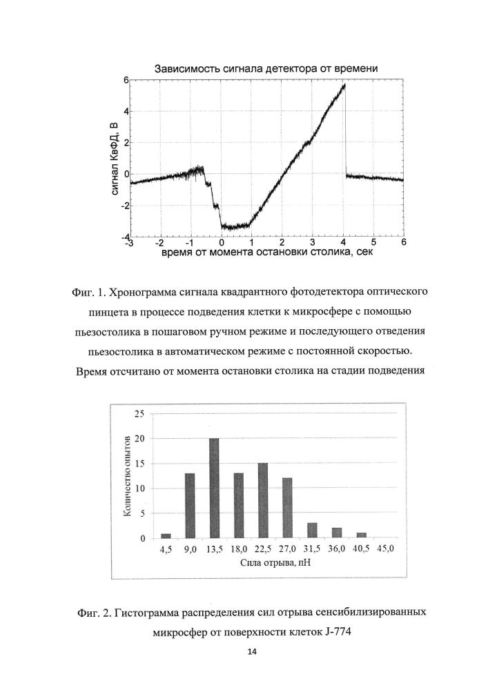 Способ количественной оценки силы связывания сенсибилизированной полистироловой микросферы с эукариоцитом линии j-774 на основе метода оптической ловушки