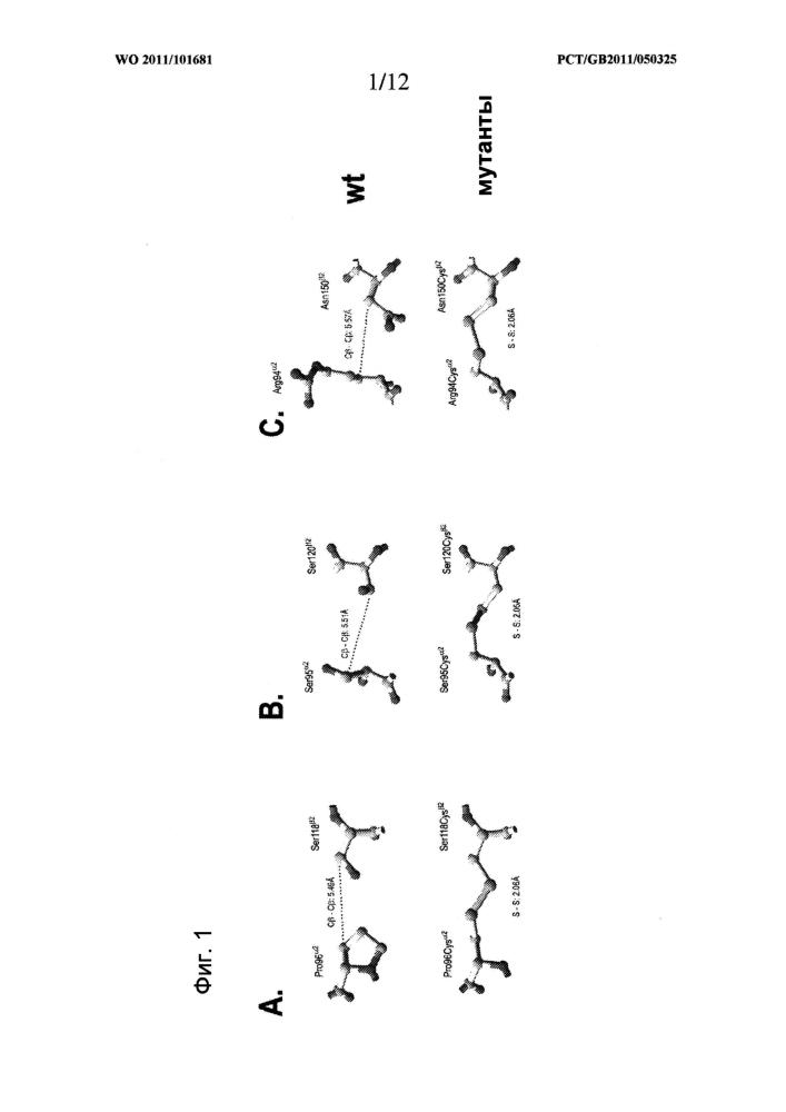Функциональные растворимые гетеродимеры мнс ii класса со стабилизирующей дисульфидной связью