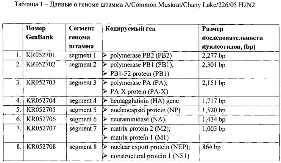 Штамм вируса гриппа a/common muskrat/chany lake/226/05 h2n2-субтипа для использования в диагностике вируса гриппа методами ртга и пцр и исследования эффективности противовирусных препаратов in vitro и in vivo