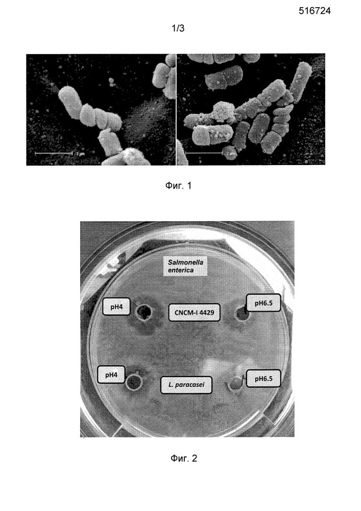 Штамм lactobacillus mucosae для получения ферментированных пищевых продуктов