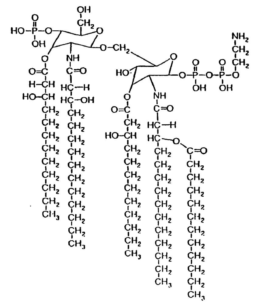 Способ бездетергентного получения везикул наружной мембраны грамотрицательной бактерии