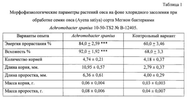 Штамм микроорганизмов achromobacter spanius 10-50-ts2 в качестве средства повышения устойчивости растений к хлоридному засолению