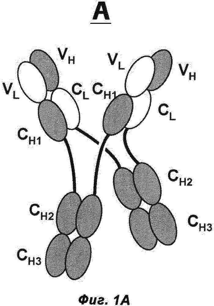 Антигенсвязывающие белки