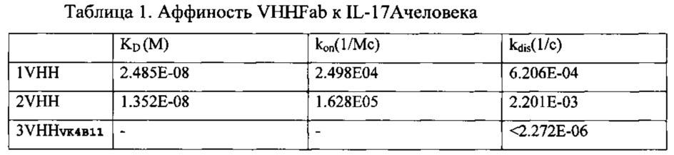 Высокоаффинные и агрегационно стабильные антитела на основе вариабельных доменов vl и производного vhh