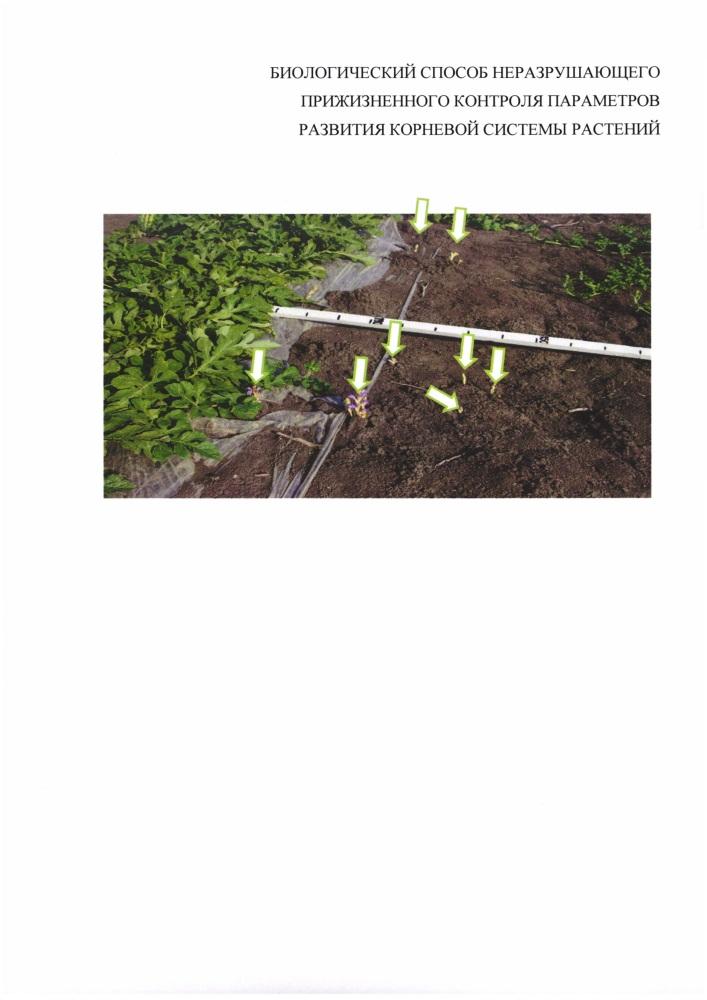 Биологический способ неразрушающего прижизненного контроля параметров развития корневой системы растений