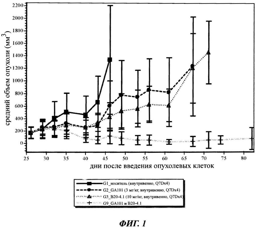 Сочетанная терапия афукозилированным антителом к cd20 с антителом к vegf