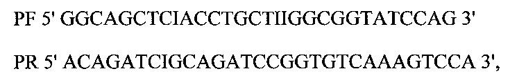 Новый рекомбинантный штамм мицелиального гриба penicillium canescens pep3 и получение на его основе комплексного ферментного препарата протеаз эндо- и экзодействия
