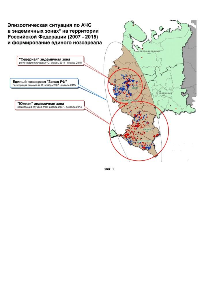 Способ обнаружения инфекционного агента африканской чумы свиней в выносном очаге заражения до его естественного инцидентного проявления (варианты)