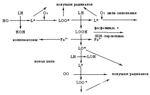 Способ определения концентрации селеноорганических соединений в биологически активных добавках