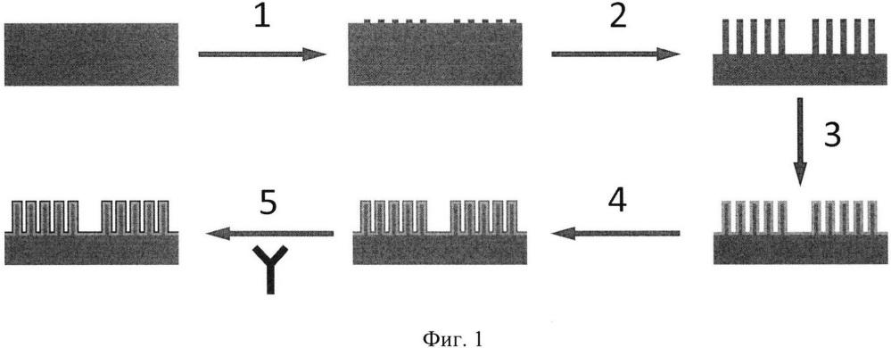 Способ создания регенерируемого биосенсора на основе комплекса фотонного кристалла с аффинными молекулами