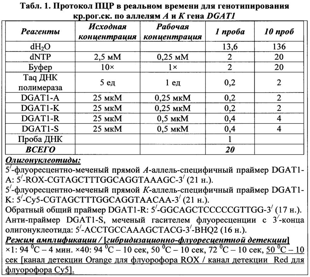 Способ проведения пцр в реальном времени для генотипирования крупного рогатого скота по аллелям а и к гена dgat1