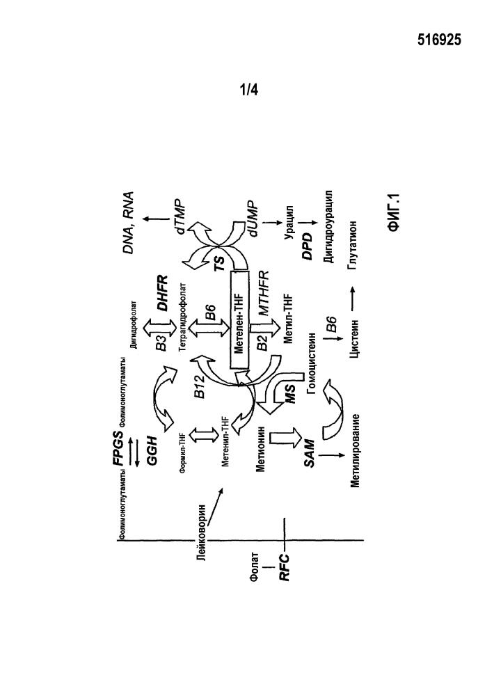 Тетрагидрофолаты в комбинации с ингибиторами egfr