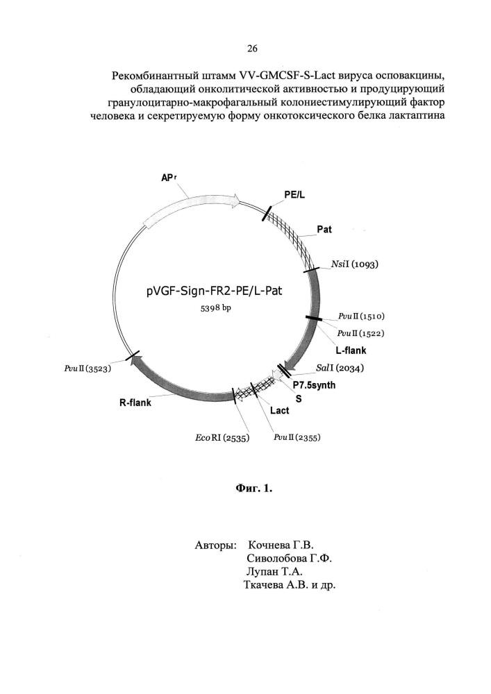 Рекомбинантный штамм vv-gmcsf-s-lact вируса осповакцины, обладающий онколитической активностью и продуцирующий гранулоцитарно-макрофагальный колониестимулирующий фактор человека и секретируемую форму онкотоксического белка лактаптина