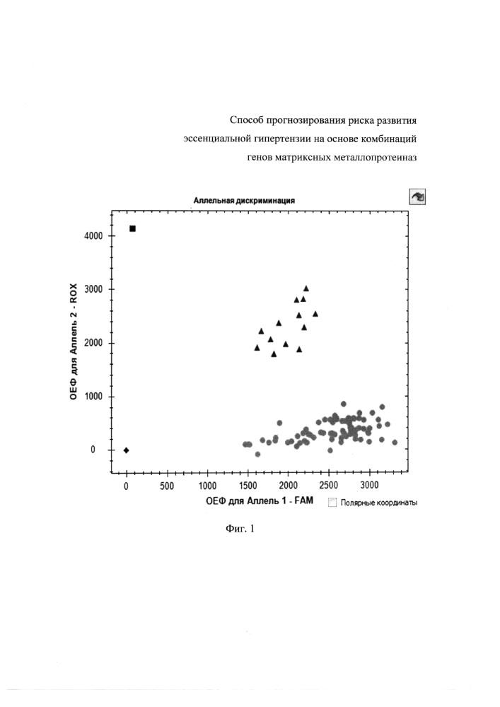 Способ прогнозирования риска развития эссенциальной гипертензии на основе комбинаций генов матриксных металлопротеиназ