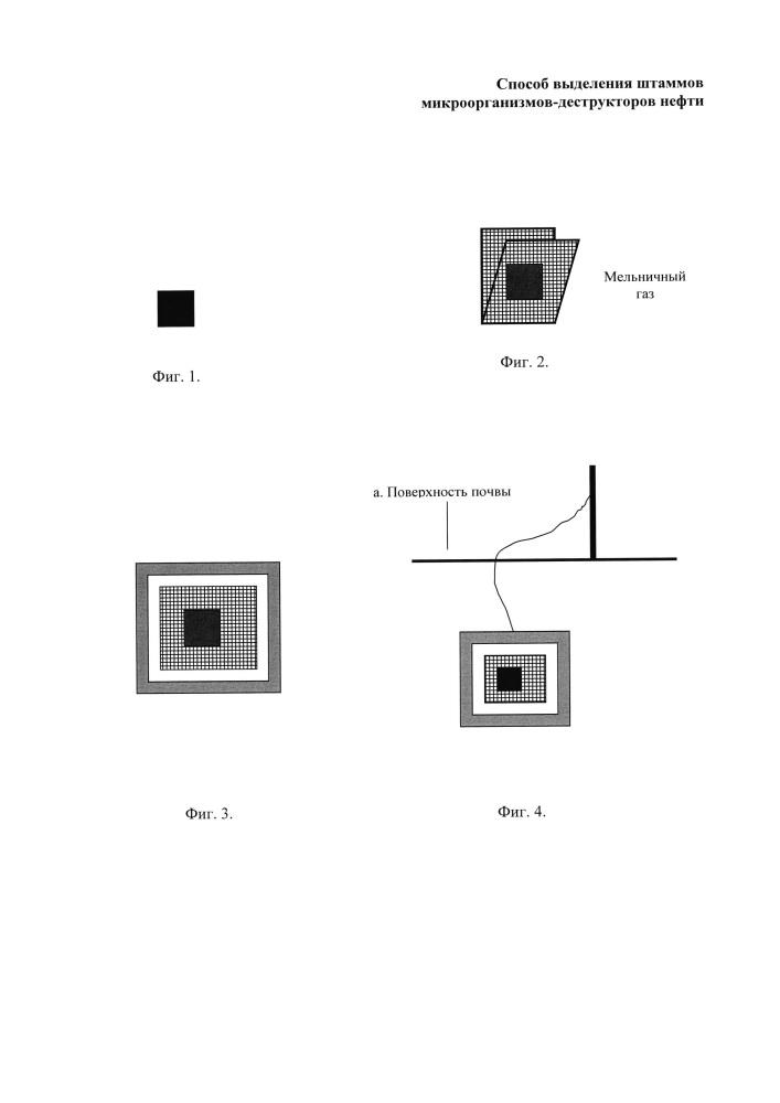 Способ выделения штаммов микроорганизмов-деструкторов нефти