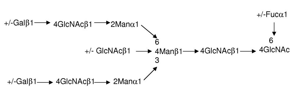 Способы ингибирования фукозилирования белков in vivo с использованием аналогов фукозы
