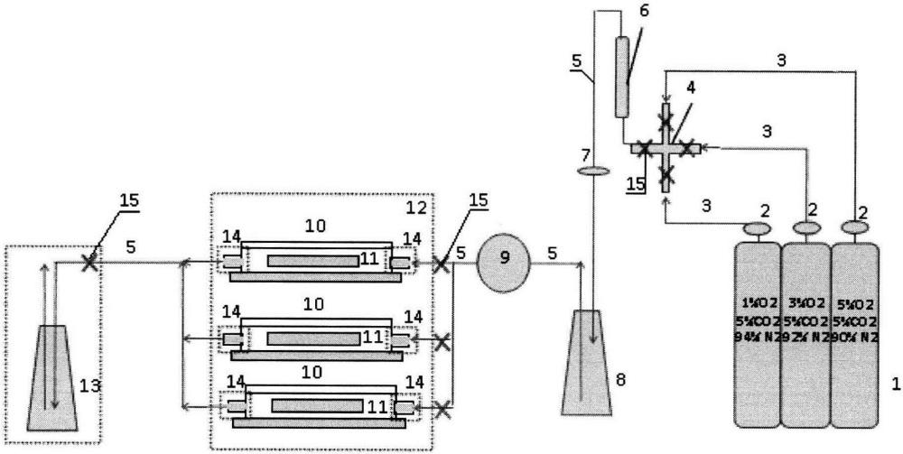 Система создания биоинженерных моделей тканей животных и человека