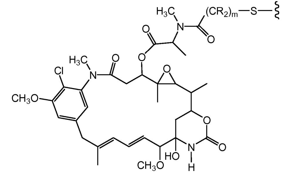 Полученные с помощью генной инженерии антитела с цистеиновыми заменами и их конъюгаты