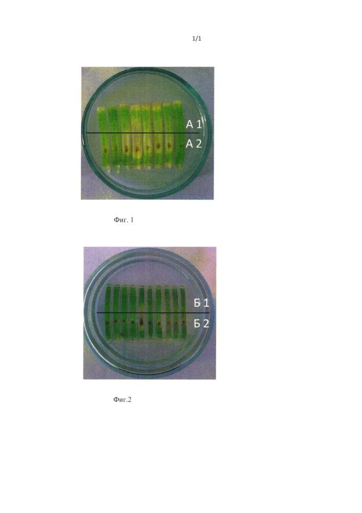 Средство защиты пшеницы и ячменя от гельминтоспориоза