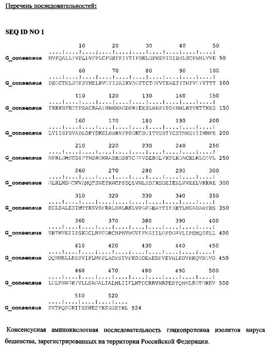 Генетическая (рекомбинантная) днк-конструкция, содержащая кодон-оптимизированный ген гликопротеина (белка g) вируса бешенства с консенсусной аминокислотной последовательностью, которая составлена с учетом аминокислотных последовательностей белка g, выделяемого из штаммов вируса бешенства, циркулирующих на территории российской федерации