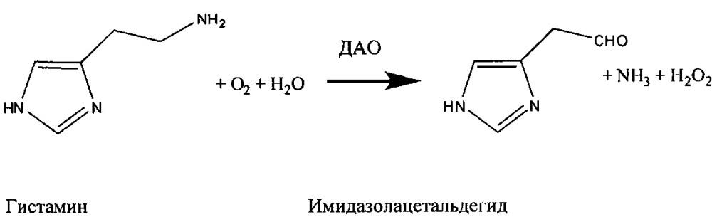 Композиции, содержащие диаминоксидазу, для предотвращения симптомов похмелья