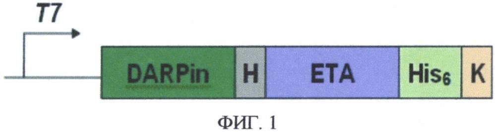Рекомбинантный таргетный токсин, специфичный к клеткам, экспрессирующим рецептор her2