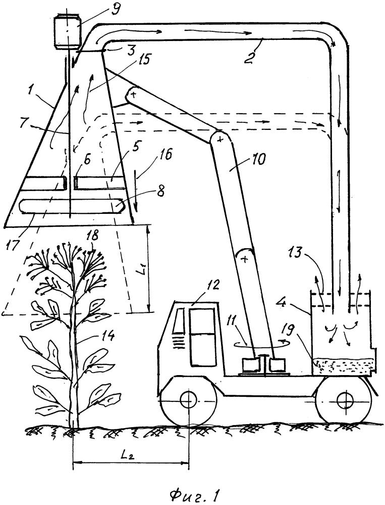 Способ предотвращения естественного распространения семян борщевика сосновского и других высокорослых зонтичных растений