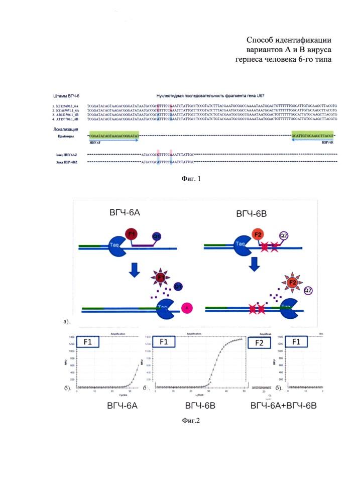 Способ идентификации вариантов а и в вируса герпеса человека 6-го типа