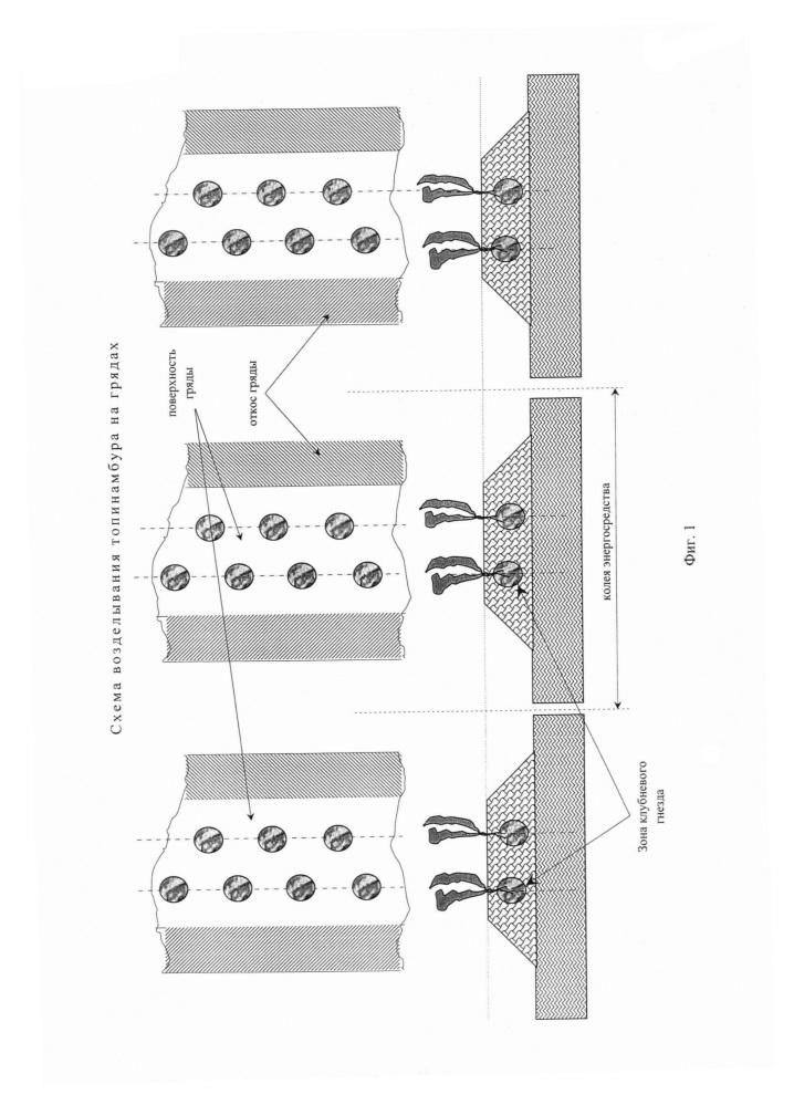 Способ промышленного возделывания топинамбура как монокультуры