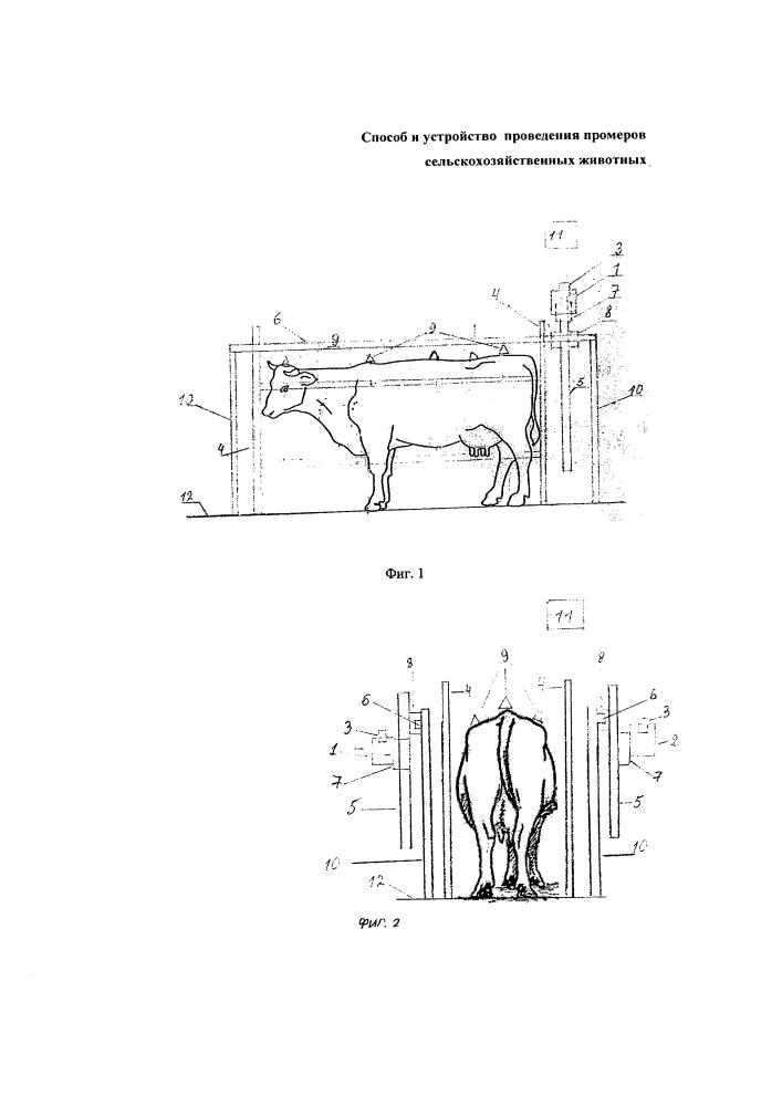 Способ и устройство проведения промеров сельскохозяйственных животных