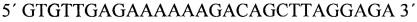 Набор олигонуклеотидных праймеров и зондов для идентификации вируса клещевого энцефалита, вируса лихорадки западного нила, боррелий и риккетсий методом мультиплексной пцр в режиме реального времени