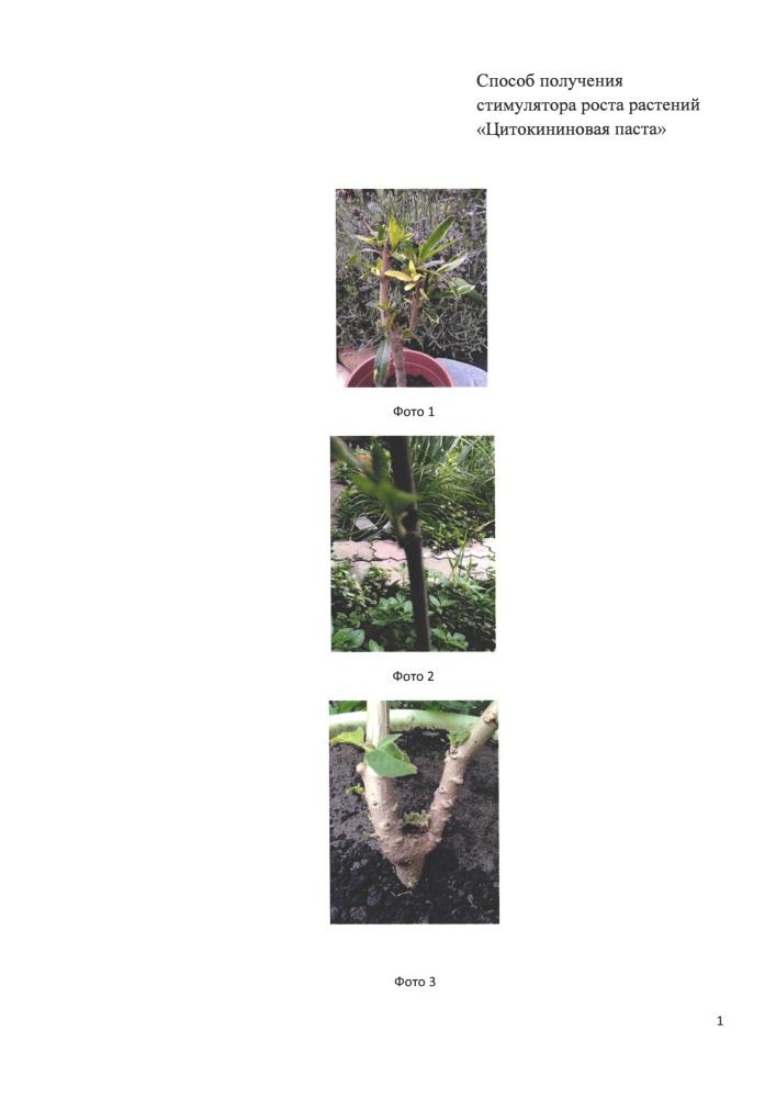 Способ получения стимулятора роста растений
