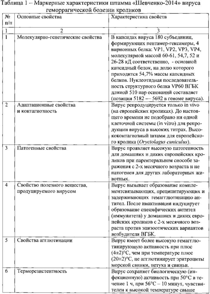 Штамм шевченко-2014 вируса геморрагической болезни кроликов для изготовления вакцинных, диагностических и лечебных препаратов