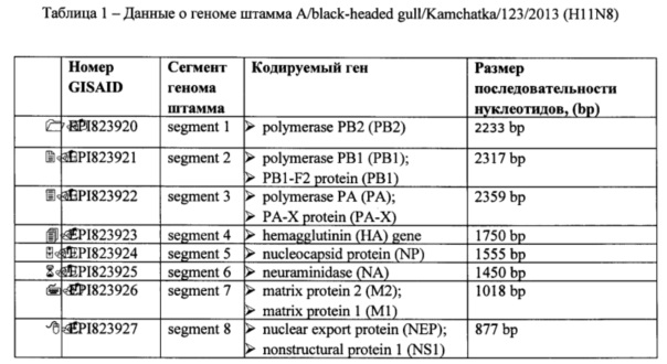 Штамм вируса гриппа a/black-headed gull/kamchatka/123/2013 h11n8-субтипа для использования в диагностике вируса гриппа методами ртга и пцр и исследования эффективности противовирусных препаратов in vitro и in vivo