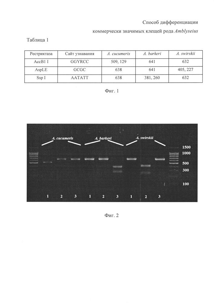 Способ дифференциации коммерчески значимых клещей рода amblyseius на основе рестрикционного анализа