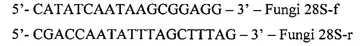 Набор олигонуклеотидных праймеров для идентификации медицински значимых микромицетов методом секвенирования днк