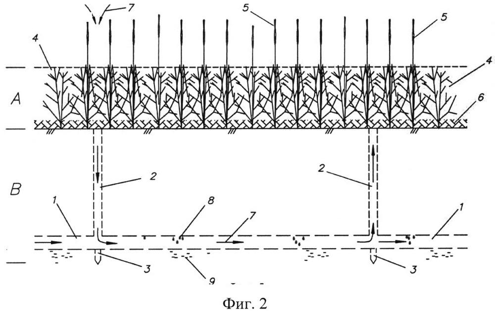 Способ самополивного внутрипочвенного орошения атмосферной парообразной влагой при выращивании зерновых культур