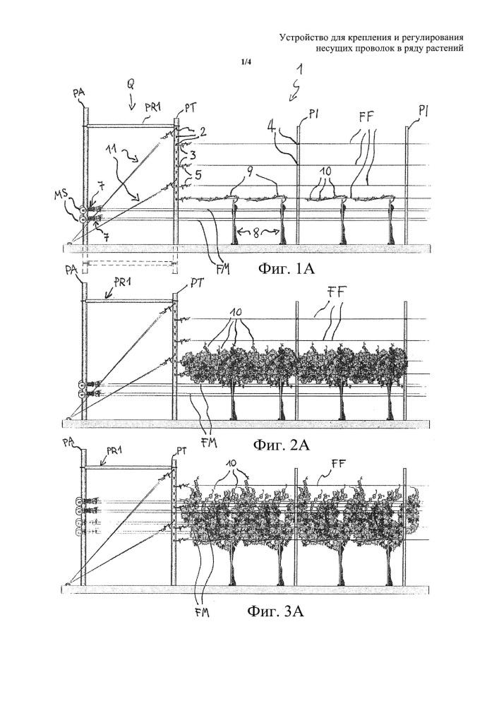 Устройство для крепления и регулирования несущих проволок в ряду растений